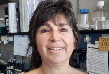 Graciela Boccaccio